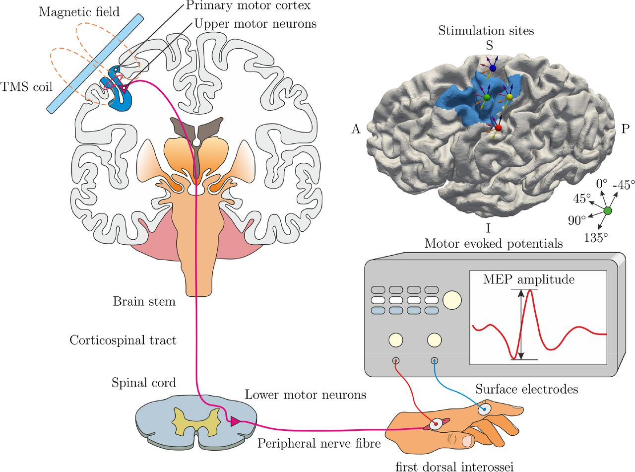 A novel approach to localize cortical TMS effects | bioRxiv