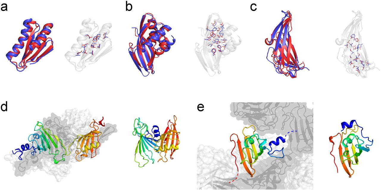 Protein structure prediction using sparse NOE and RDC
