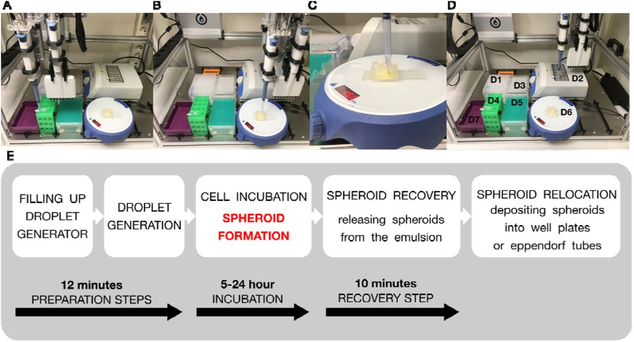 Rapid production and recovery of cell spheroids by automated