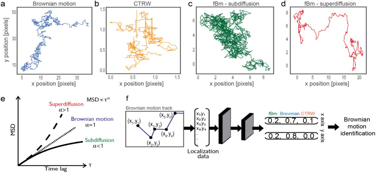 Single particle diffusion characterization by deep learning