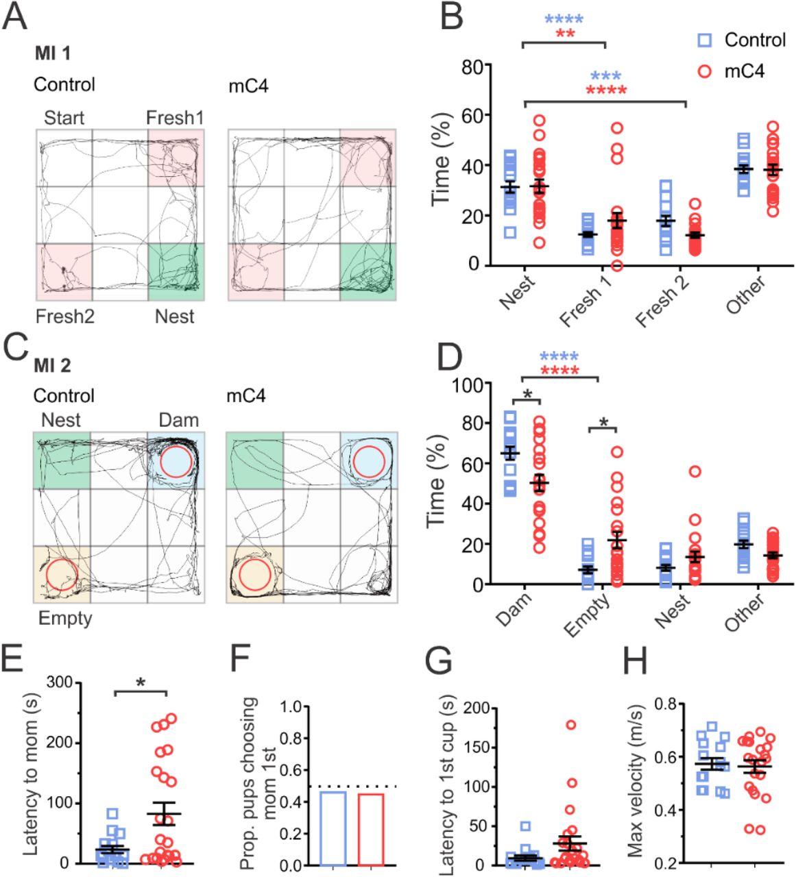 Increased expression of schizophrenia-associated gene C4