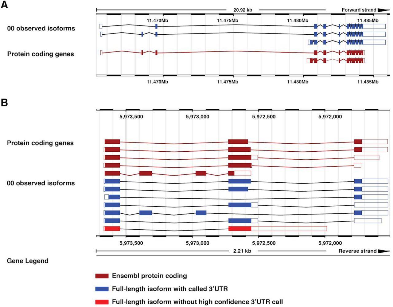 The full-length transcriptome of C  elegans using direct RNA