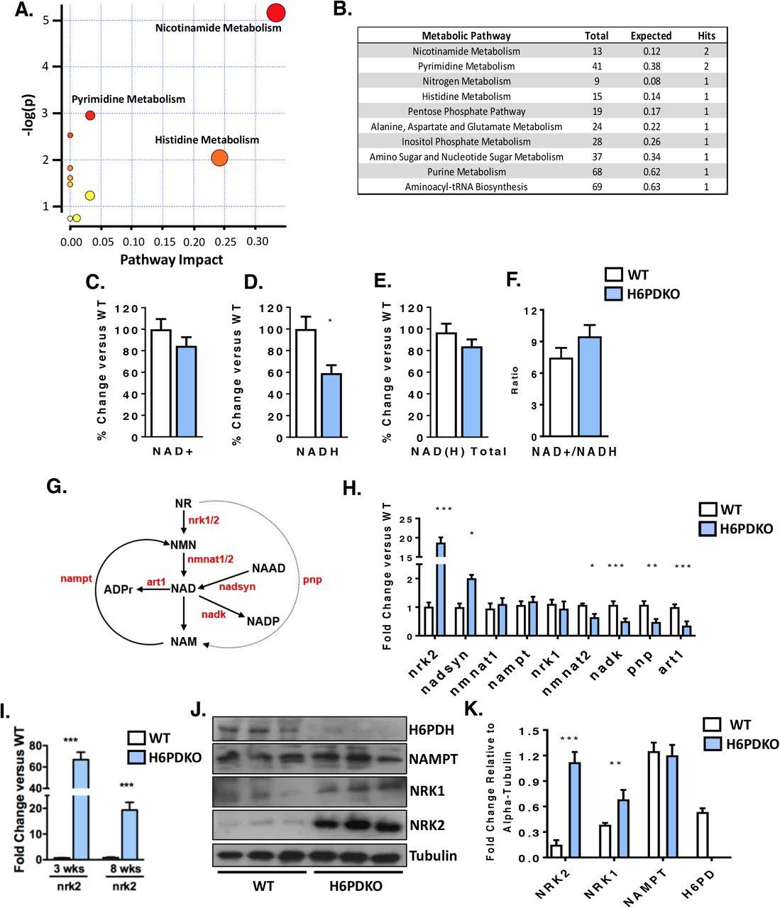 Induction of the nicotinamide riboside kinase NAD+ salvage
