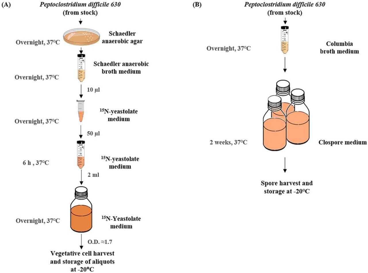 Vegetative Cell and Spore Proteomes of Peptoclostridium