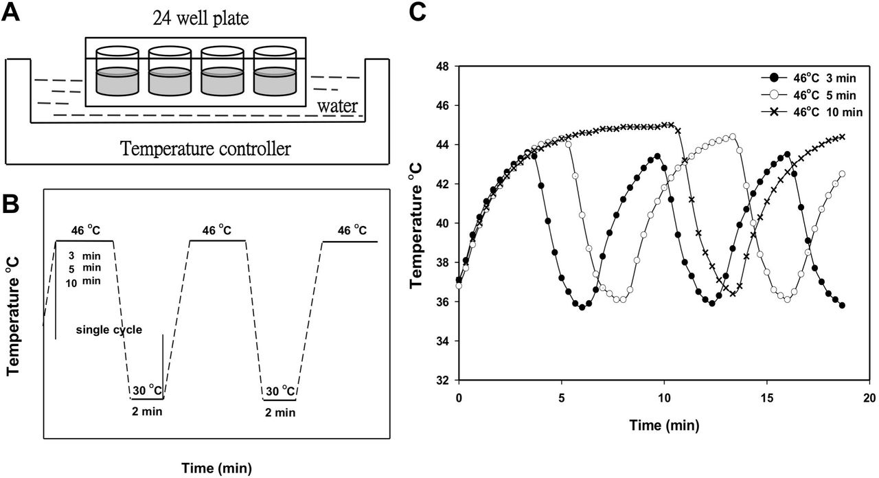 Thermal cycling-hyperthermia in combination with polyphenols