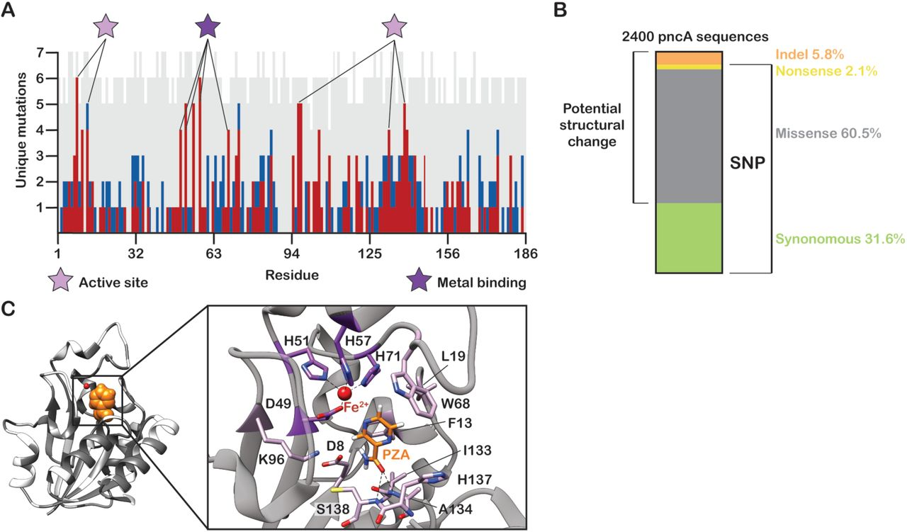Prediction of pyrazinamide resistance in Mycobacterium tuberculosis