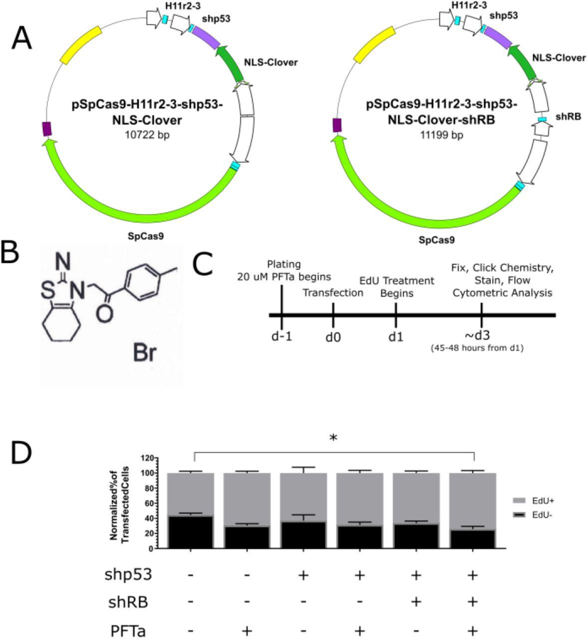 CRISPR/Cas9 Treatment Causes Extended TP53-Dependent Cell