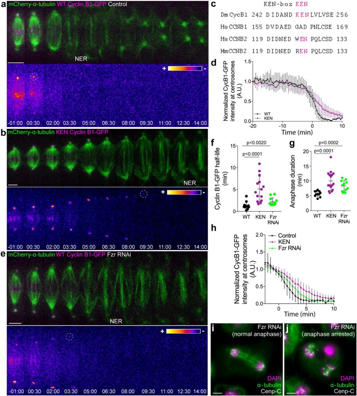 Mitotic exit is controlled during anaphase by an Aurora B
