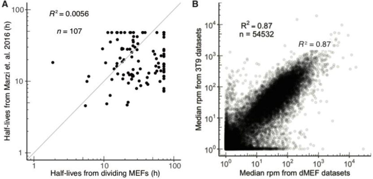 Global analyses of the dynamics of mammalian microRNA