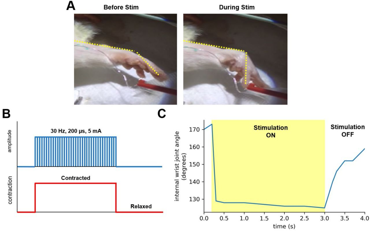 A Truly Injectable Neural Stimulation Electrode Made from an