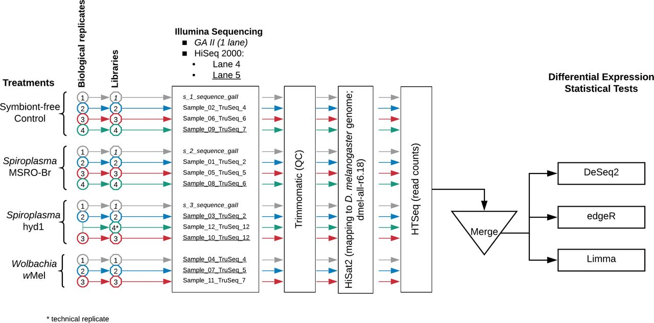 """Experimental design and workflow for data analysis. The biological replicates, corresponding libraries, and sequence file labels are distinguished by colours and font type. Italics = samples run on Illumina GAII. Non-italics = samples run on Illumina HiSeq 2000; non-underlined samples were pooled into one sequencing lane (4), whereas underlined samples were pooled into another lane (5). Library labelled """"Sample_12_TruSeq_12"""" is the result of combining total RNA from Hyd1 biological replicates 2 and 3, and thus considered a technical, rather than biological, replicate. This library was excluded from the differential expression analyses."""