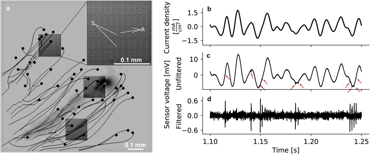 Probing and predicting ganglion cell responses to smooth electrical