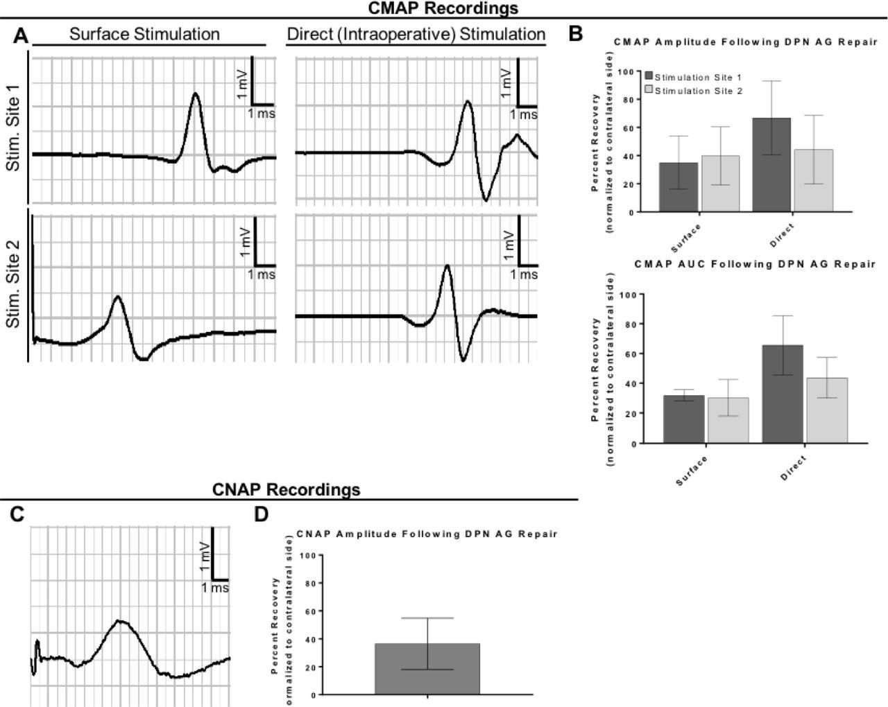 A Porcine Model of Peripheral Nerve Injury Enabling Ultra