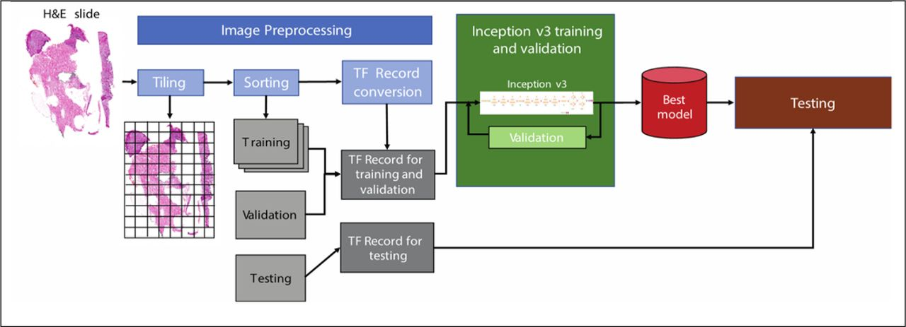 A Deep Learning Approach for Rapid Mutational Screening in