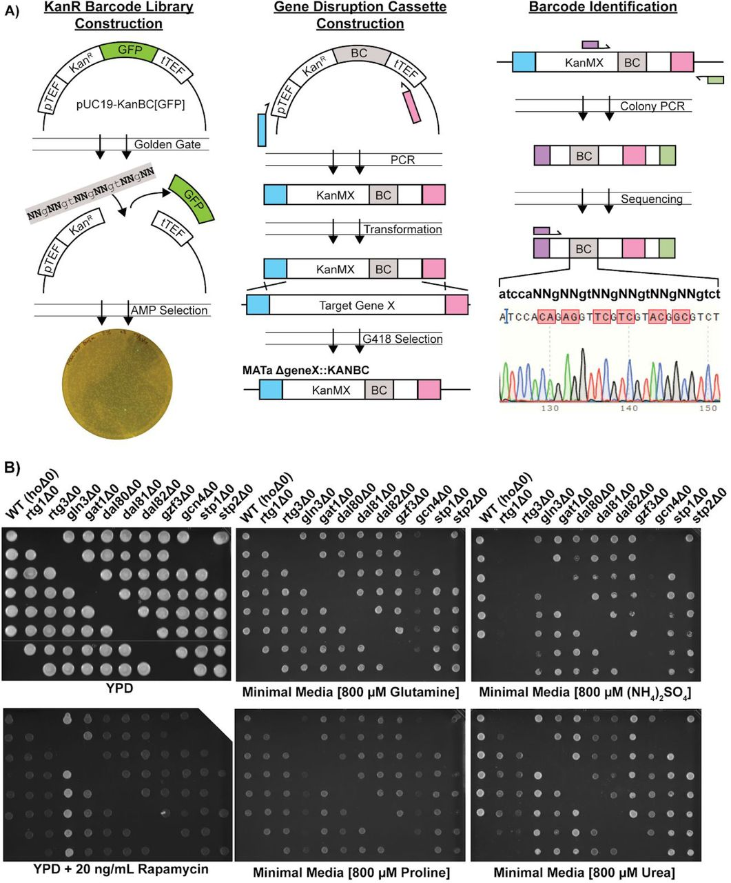 Gene regulatory network reconstruction using single-cell RNA