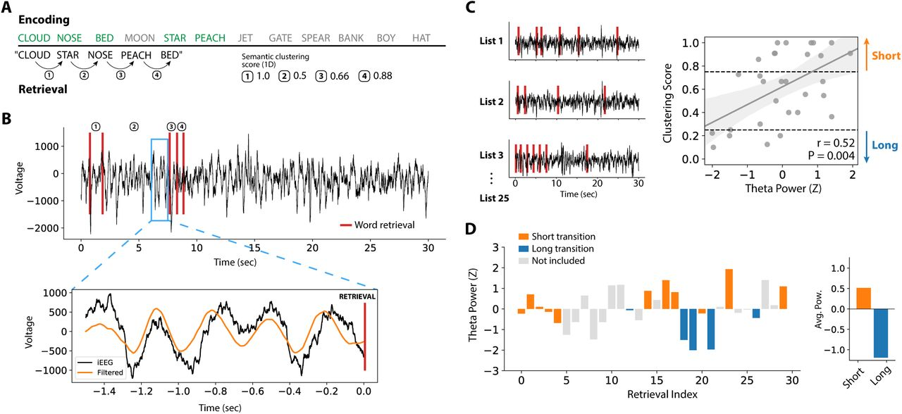 Hippocampal theta codes for distances in semantic and