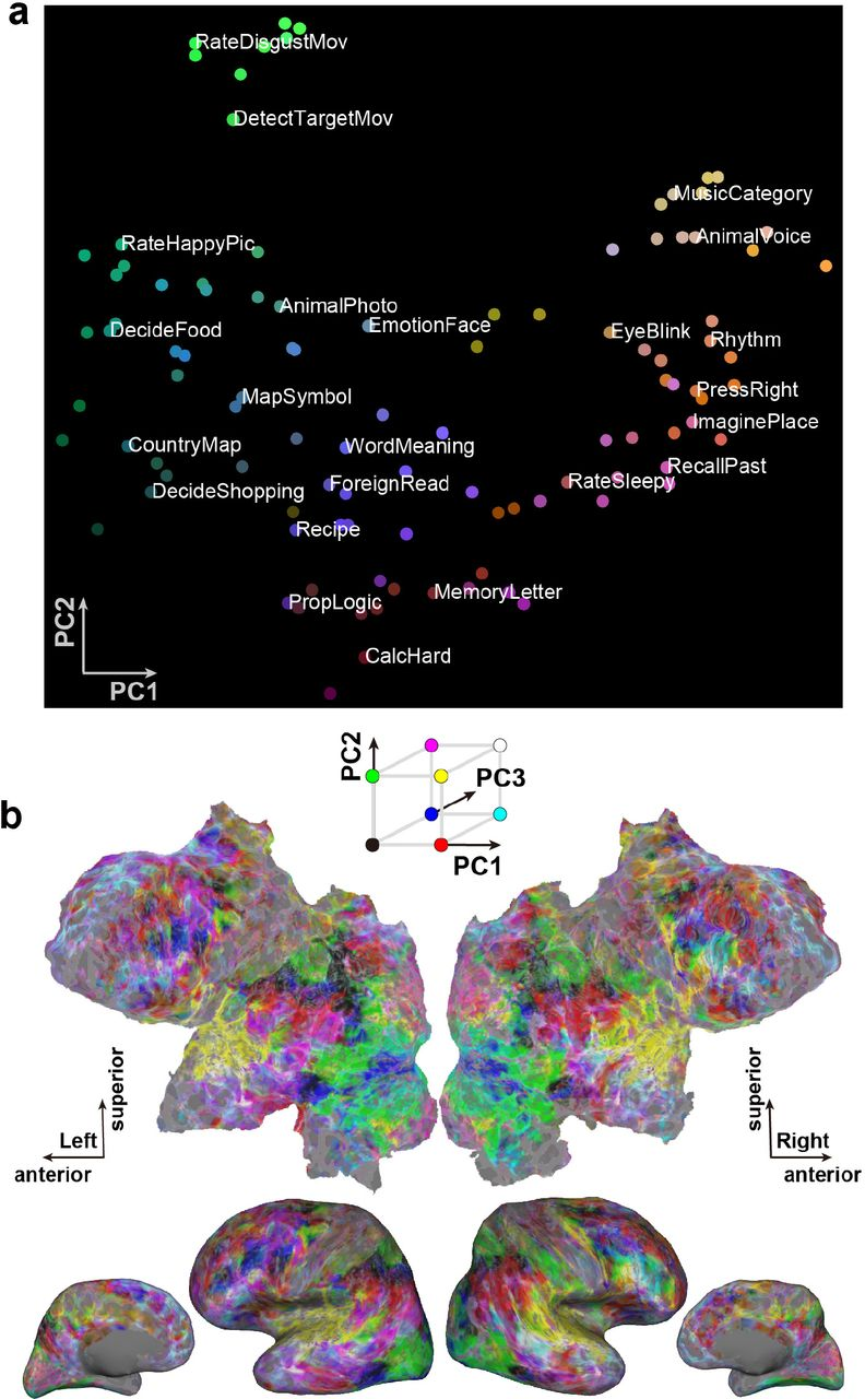 Data-driven models reveal the organization of diverse cognitive