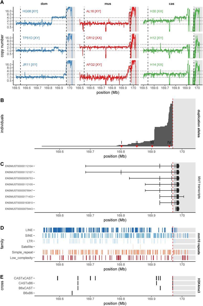 Instability of the pseudoautosomal boundary in house mice | bioRxiv