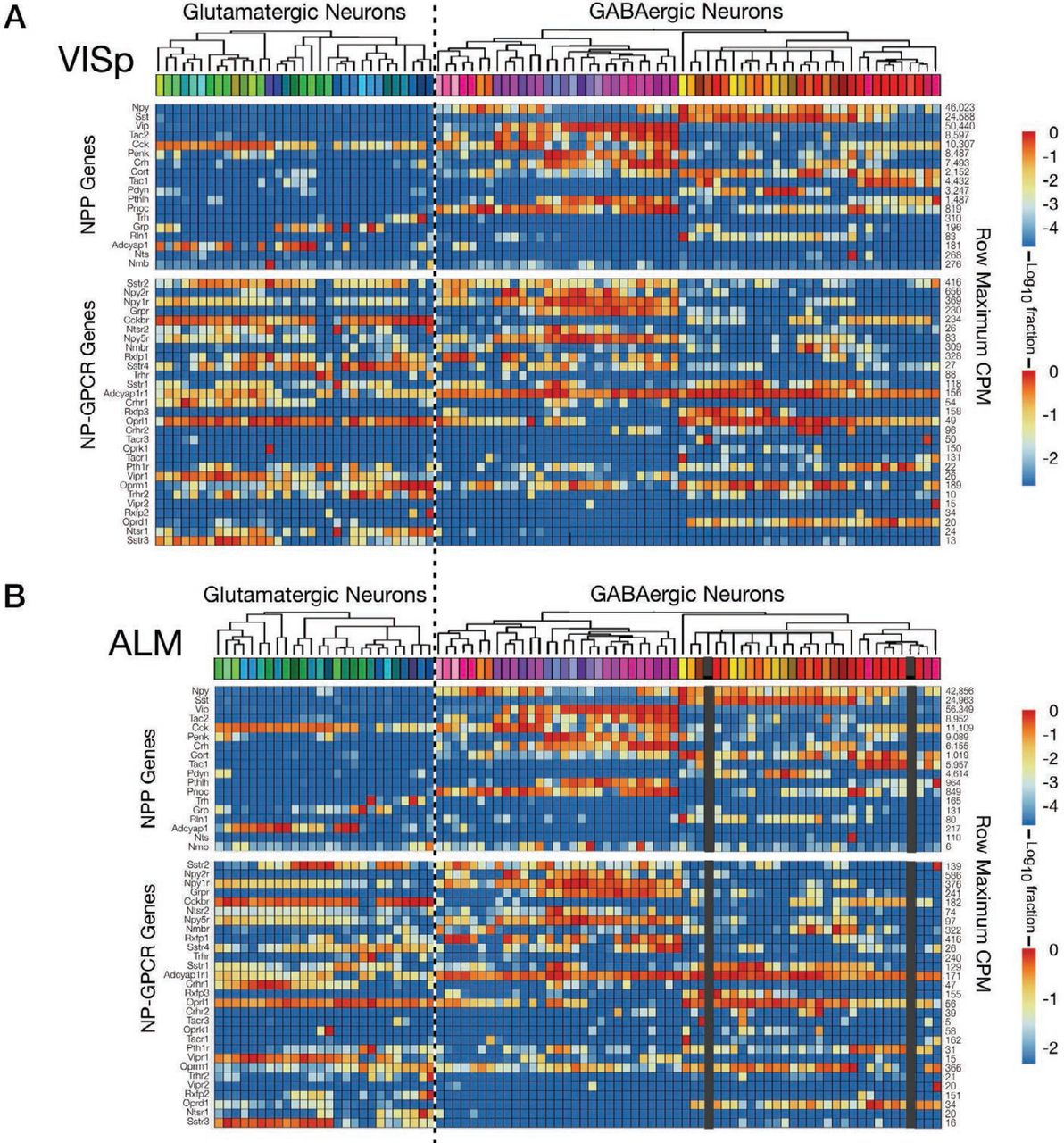Single-Cell Transcriptomic Evidence for Dense Intracortical