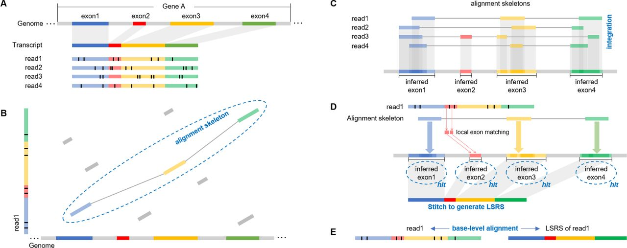 deSALT: fast and accurate long transcriptomic read alignment with de