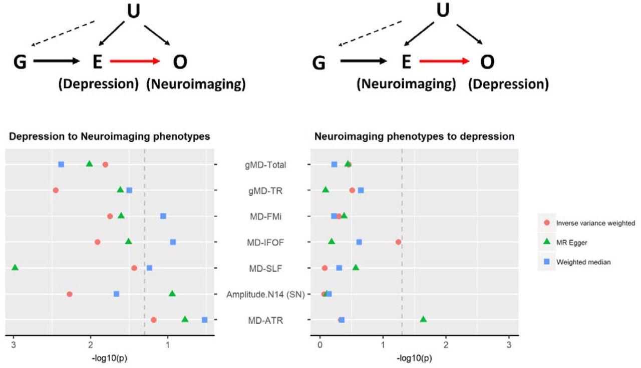 A phenome-wide association and Mendelian Randomisation study