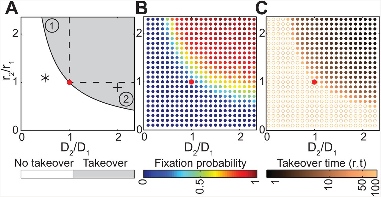 Evolution at the edge of expanding populations   bioRxiv