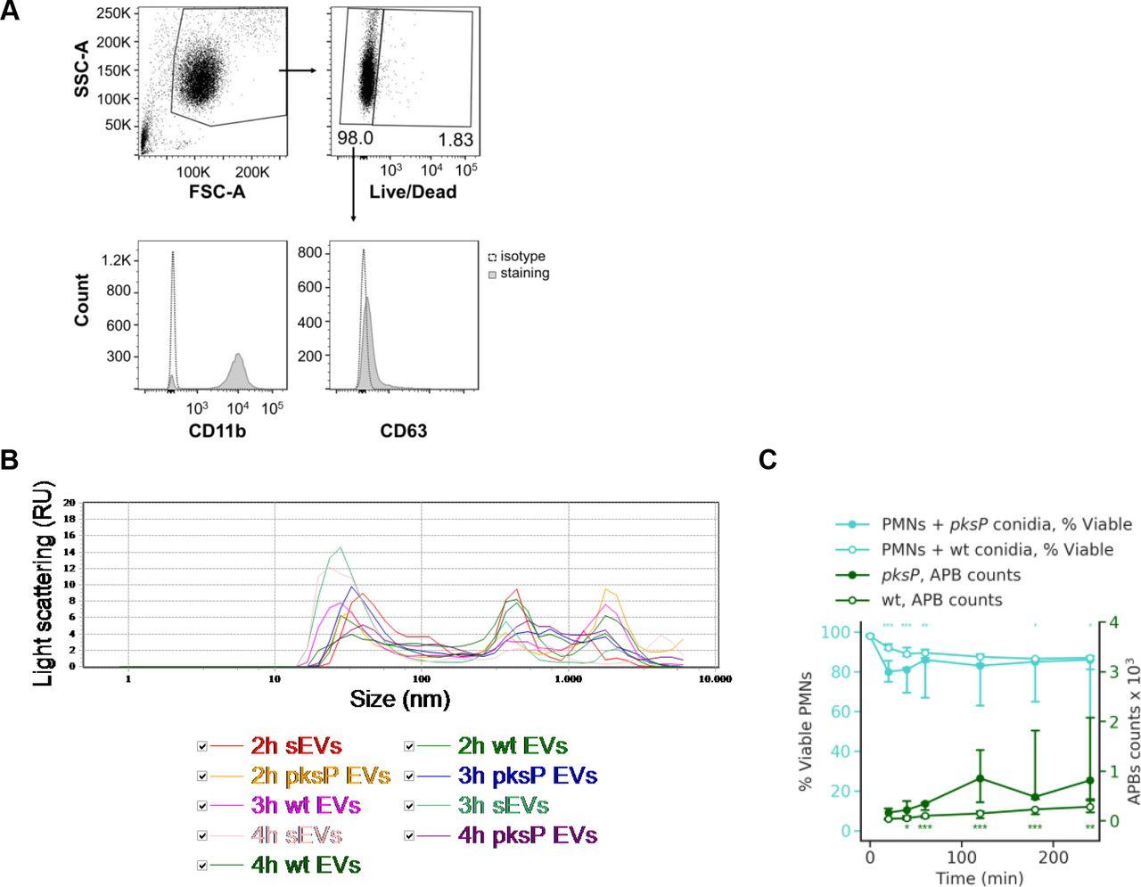 Human neutrophils produce antifungal extracellular vesicles