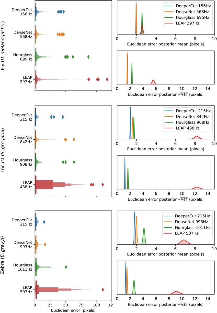 Fast and robust animal pose estimation | bioRxiv
