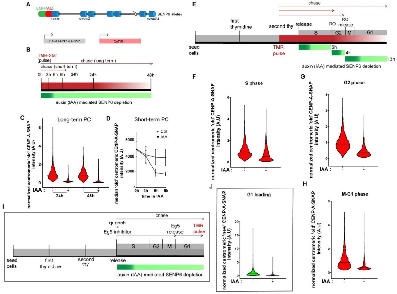 Genetic screening identifies a SUMO protease dynamically