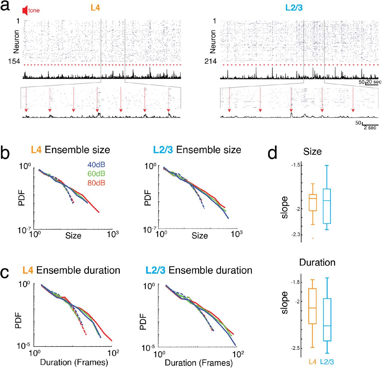 Neuronal avalanches in input and associative layers of auditory