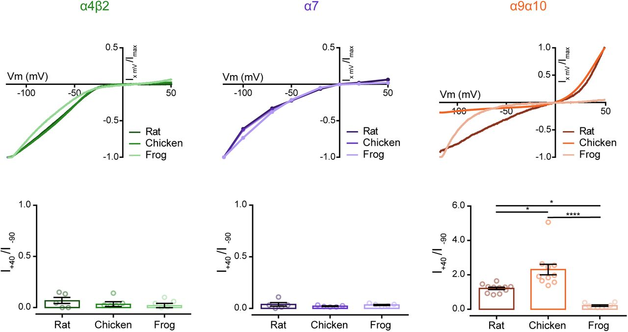 Distinct evolutionary trajectories of neuronal and hair cell ... on