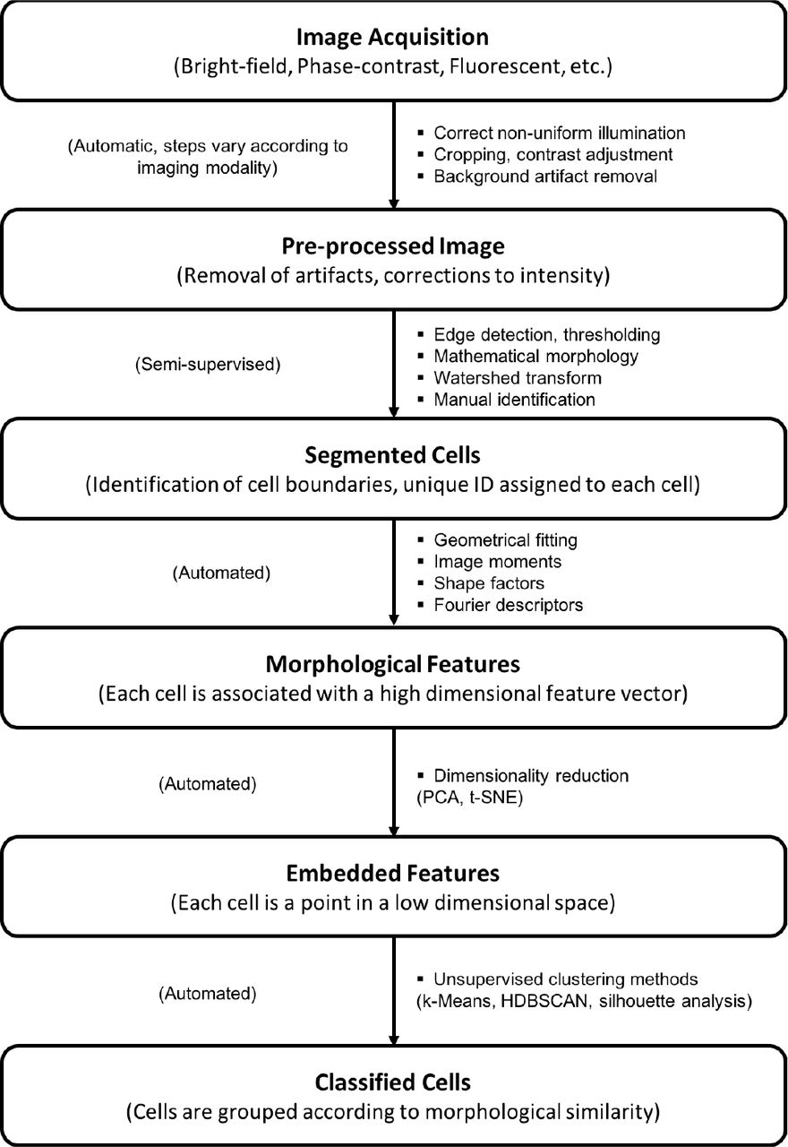A methodology for morphological feature extraction and