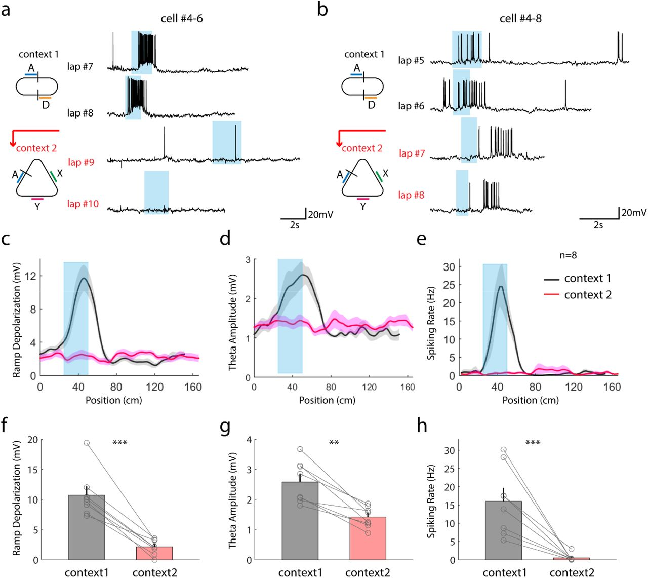 Synaptic mechanisms of context-dependent sensory responses in the