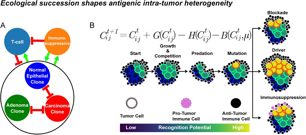 Niche engineering drives early passage through an immune