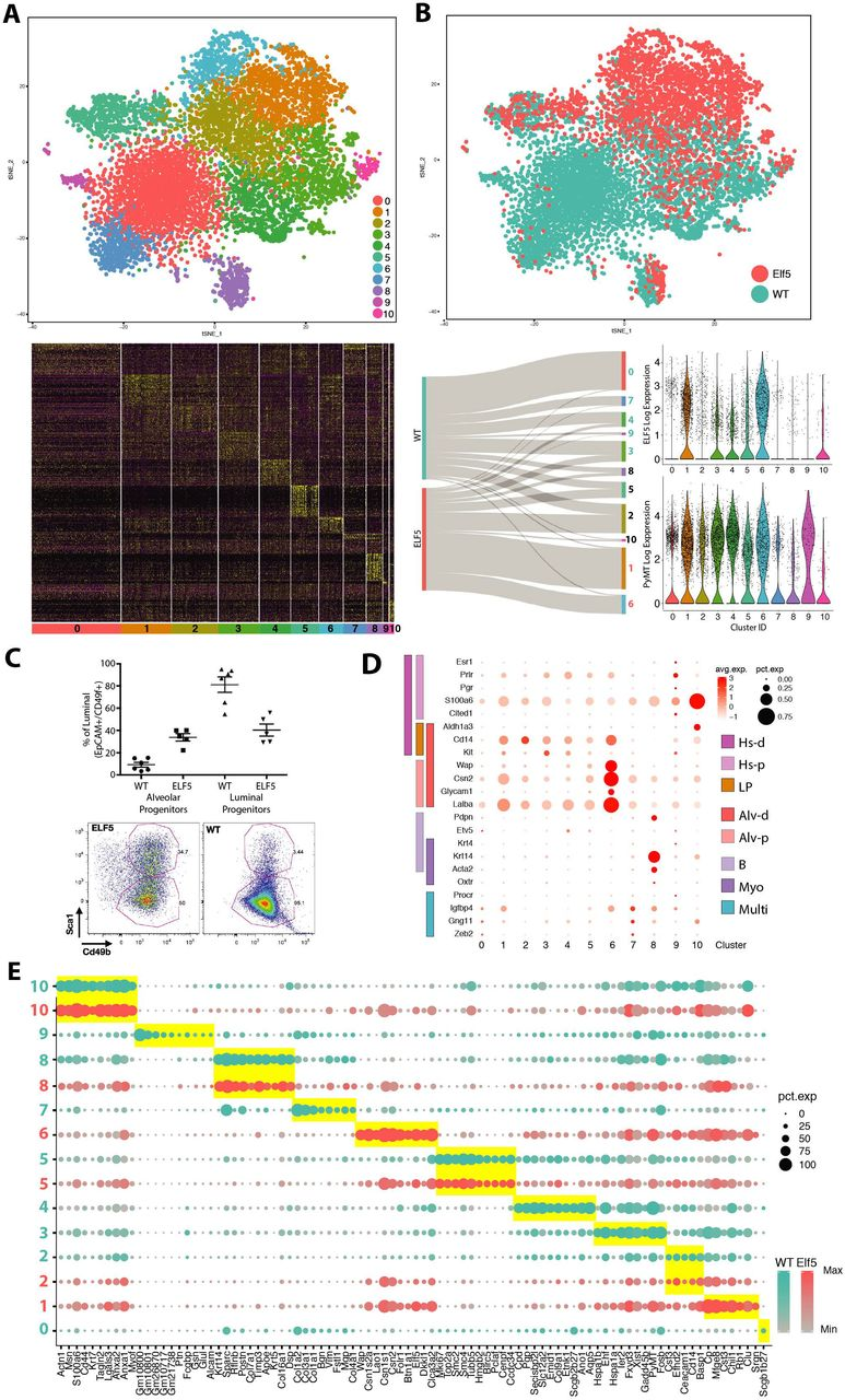 Single-cell RNAseq uncovers involution mimicry as an