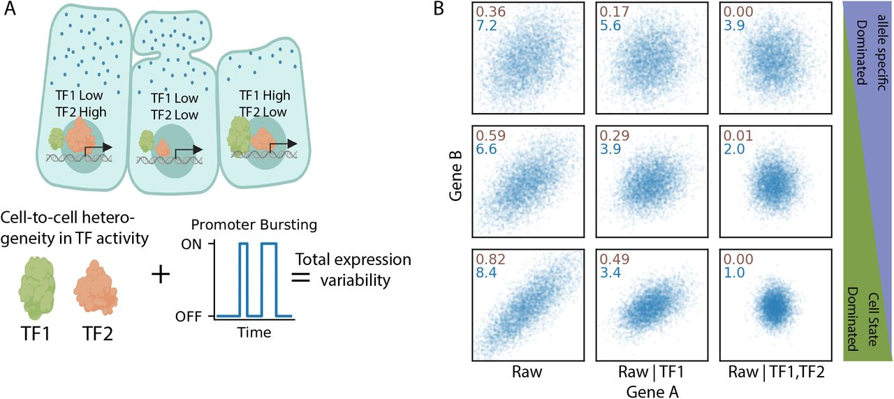 Mammalian gene expression variability is explained by underlying