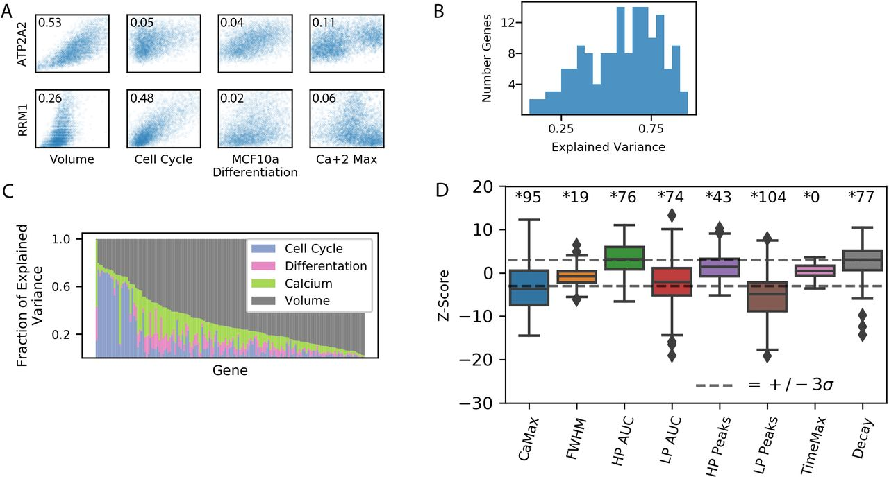 Mammalian gene expression variability is explained by