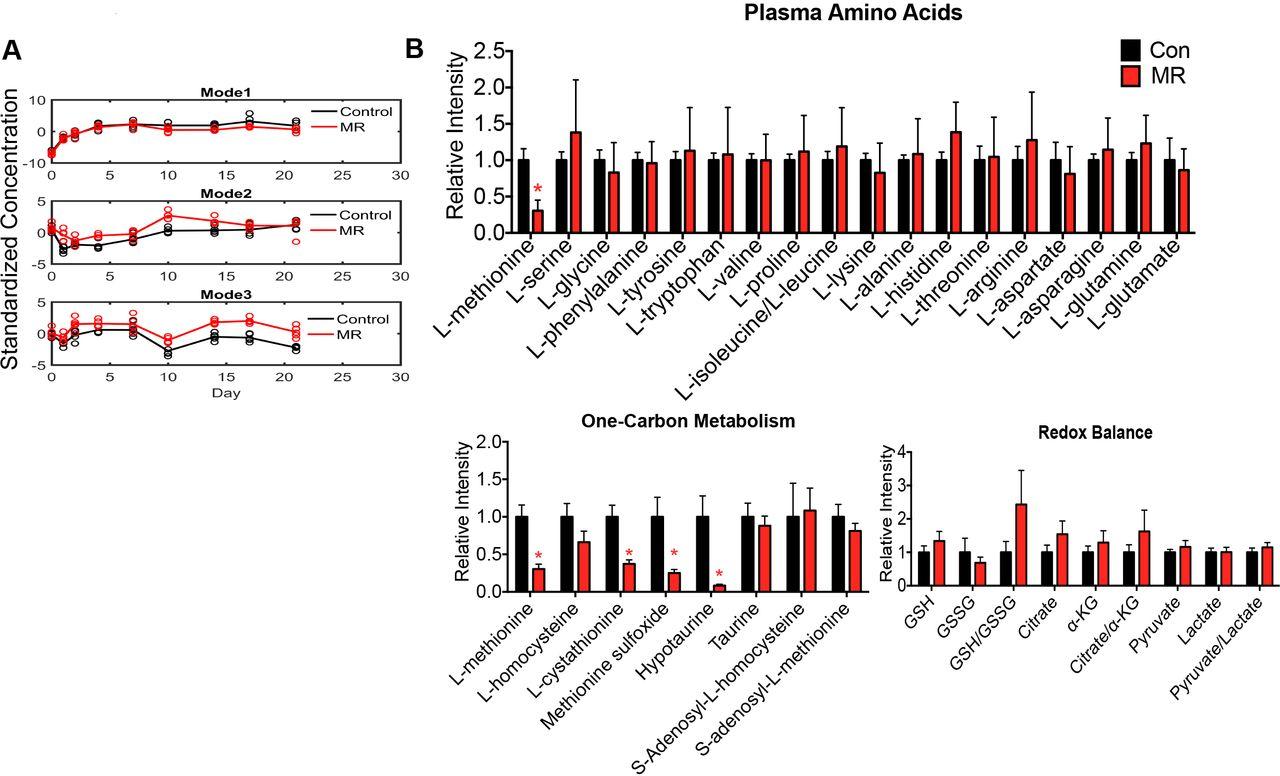 Dietary methionine restriction targets one carbon metabolism