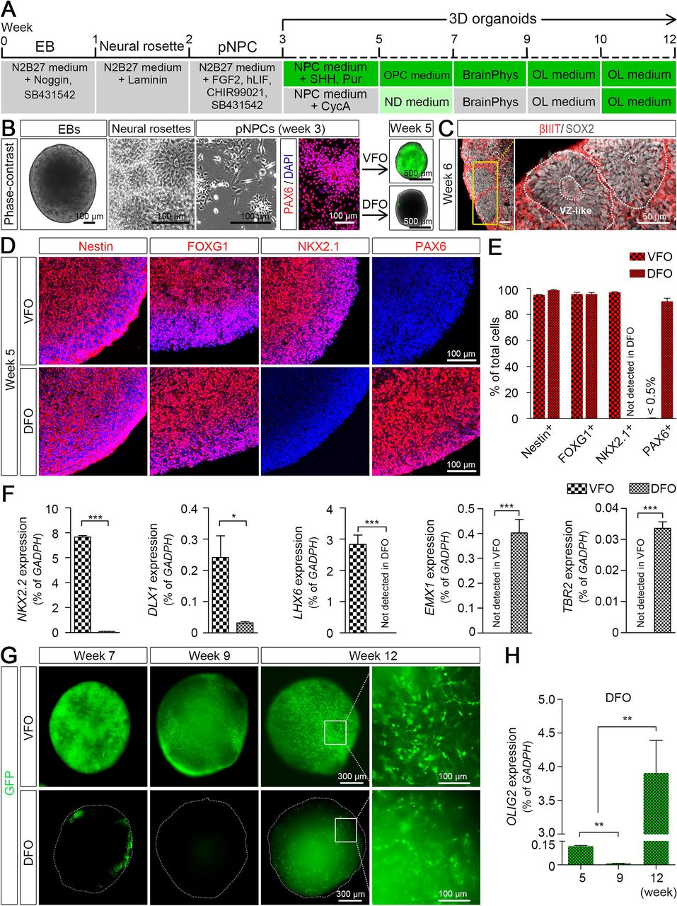 Neurotoxicity Predicted By Organoids >> Pluripotent Stem Cell Derived Cerebral Organoids Reveal