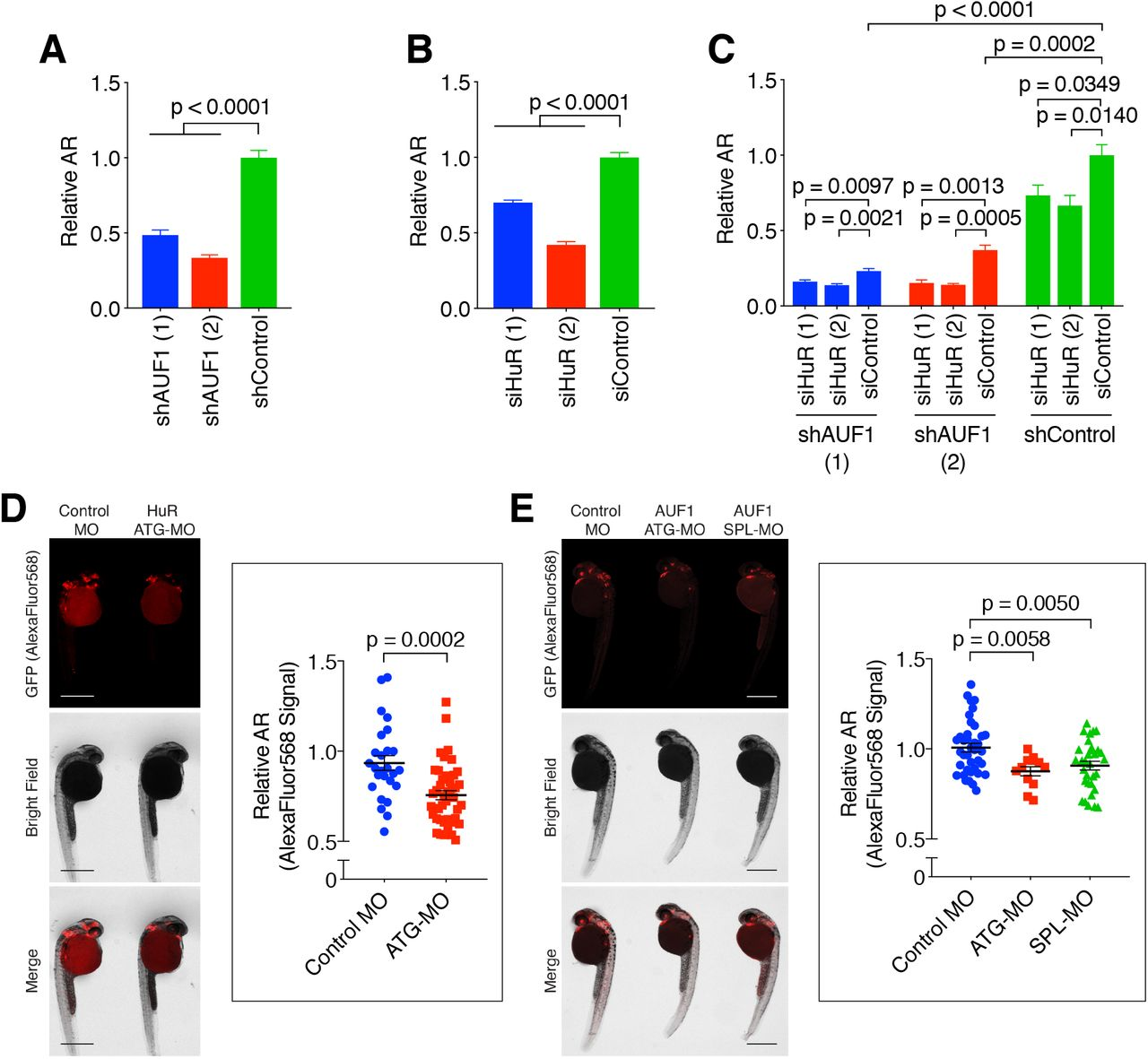 Post-transcriptional regulation of Nrf2-mRNA by the mRNA-binding