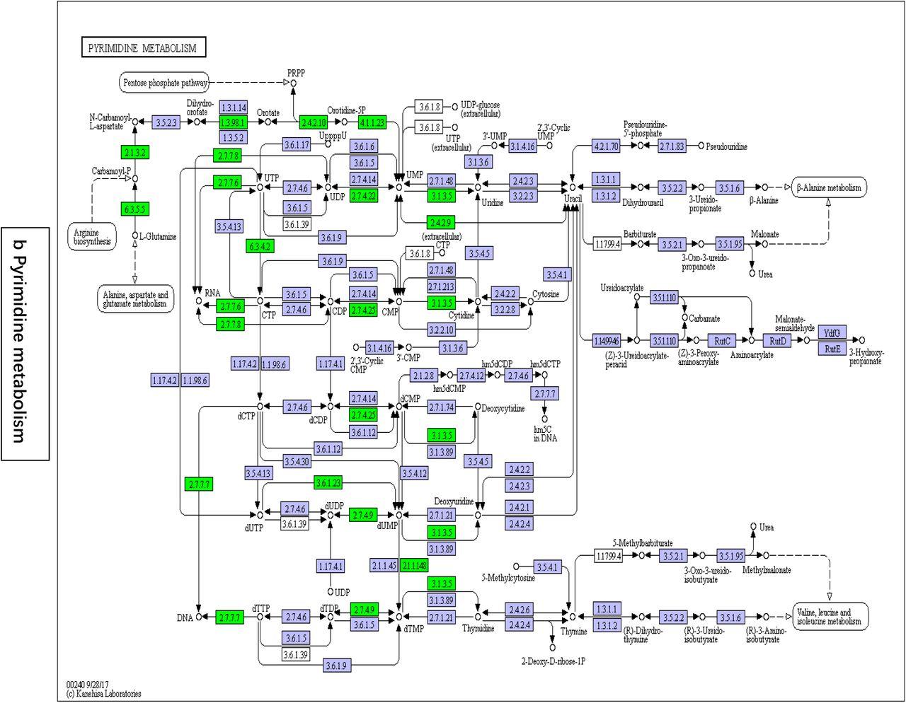 Baja Warrior Vs Coleman on tao tao clutch diagram, chinese atv engine diagram, baja engine diagram, tao tao atv parts diagram, baja suspension, 2007 yamaha baja scooter carb diagram,