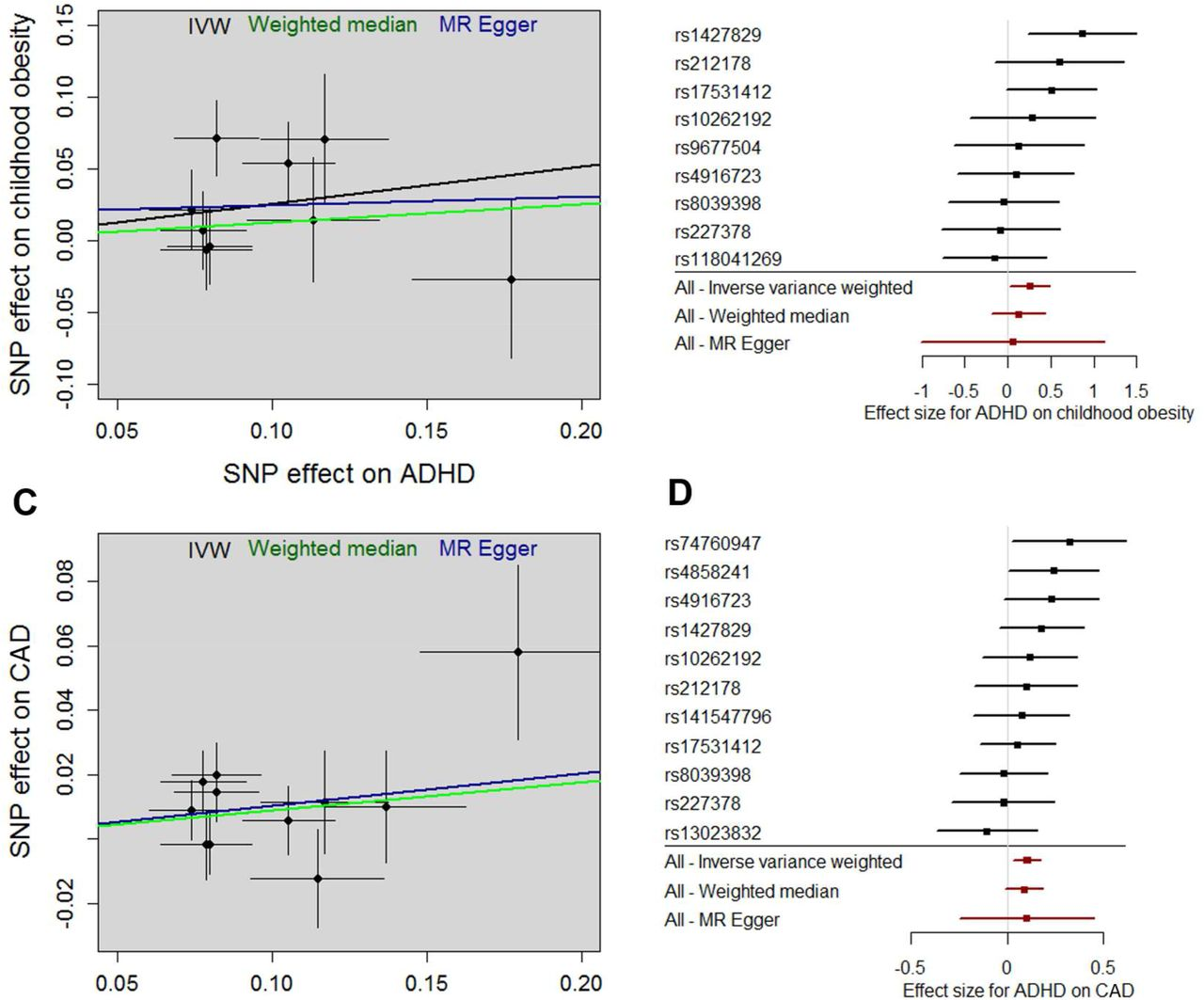 ADHD genetic liability and physical health outcomes - A two