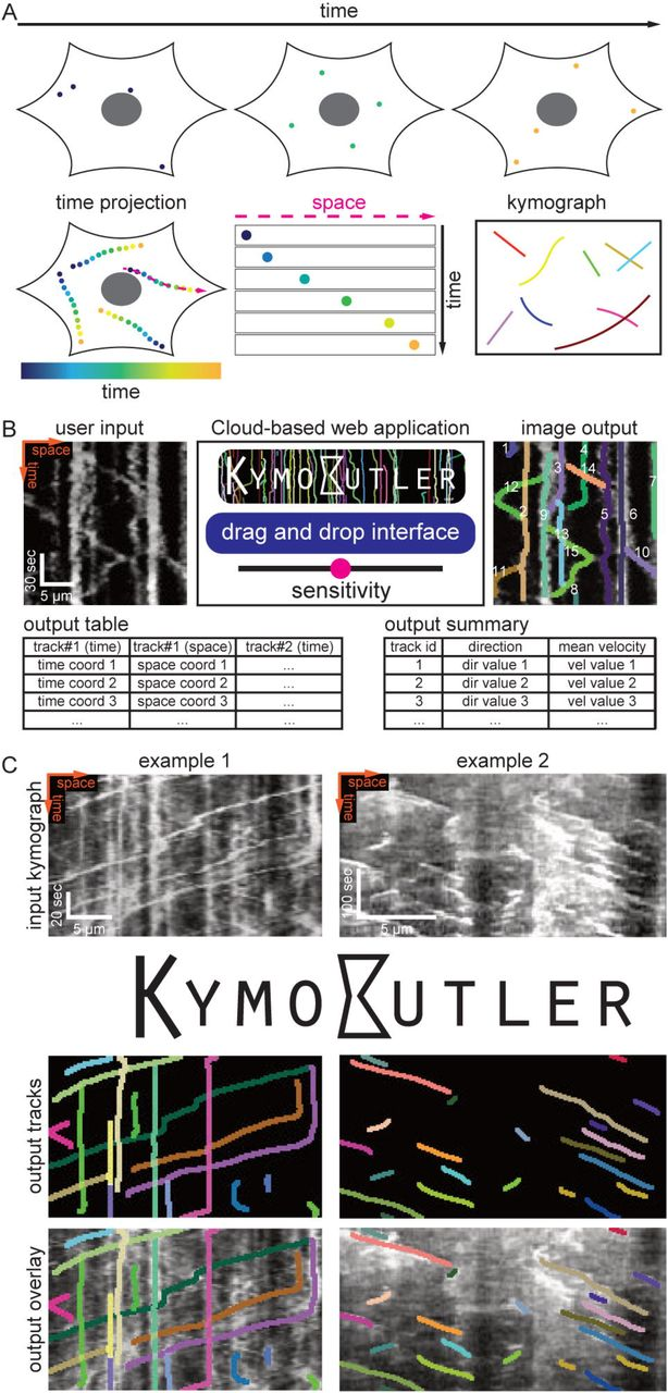 KymoButler, a Deep Learning software for automated kymograph