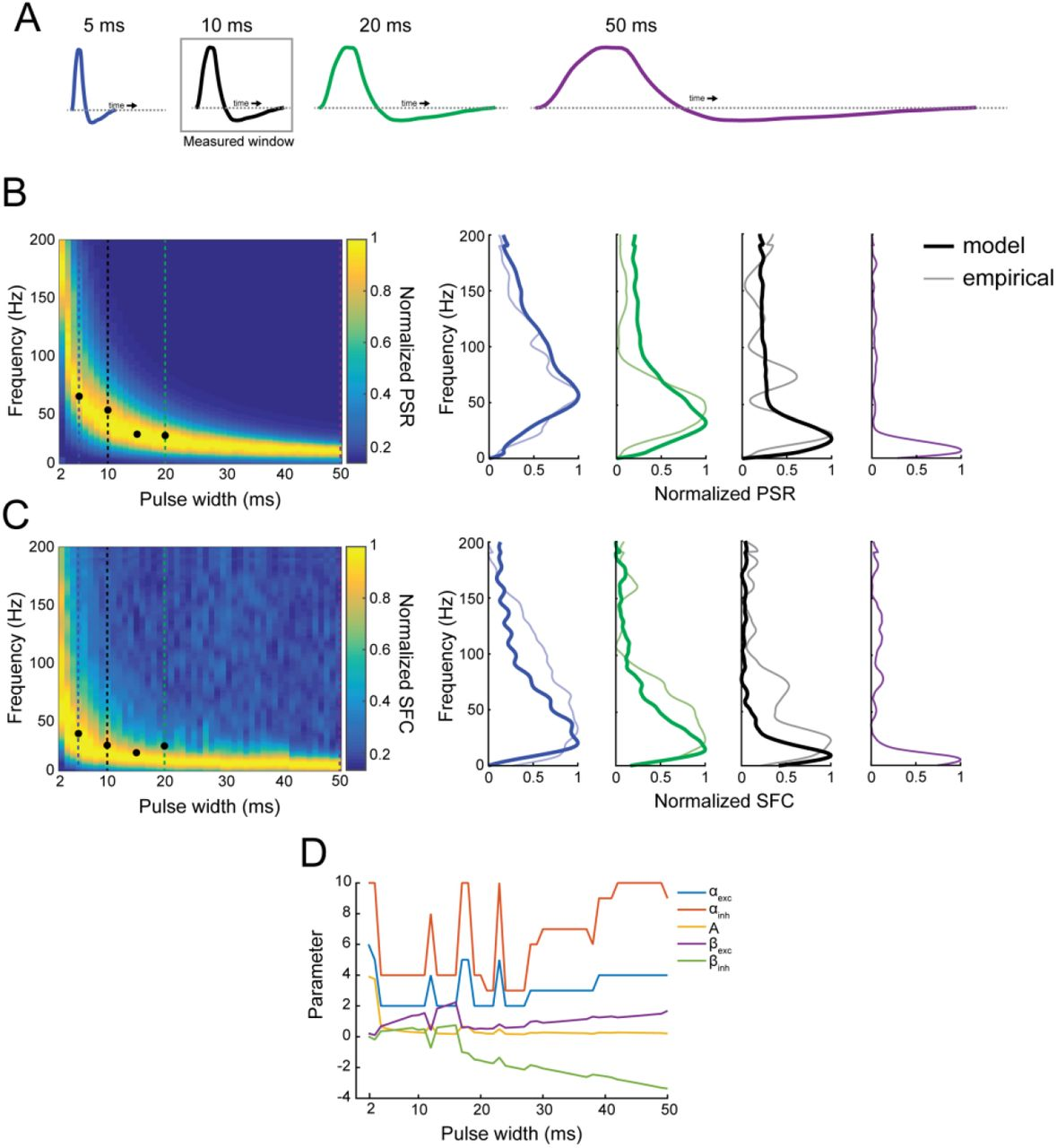 Coherent neuronal dynamics driven by optogenetic stimulation in the