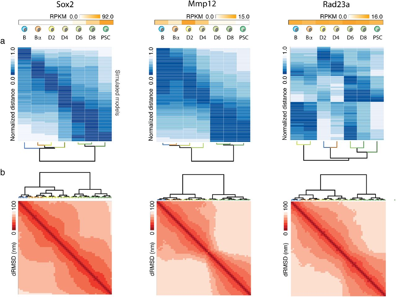 Dynamic simulations of transcriptional control during cell