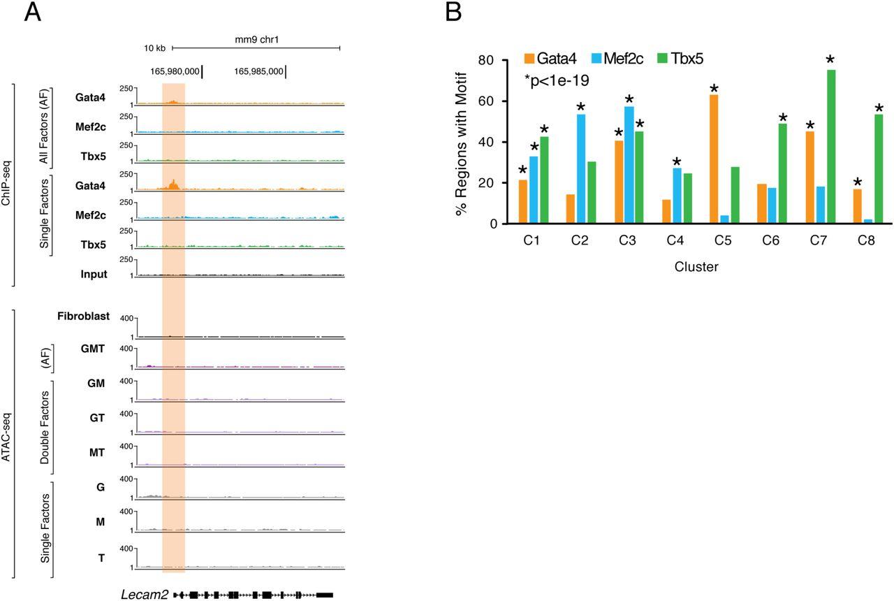 Unique Transcription Factor Functions Regulate Epigenetic and