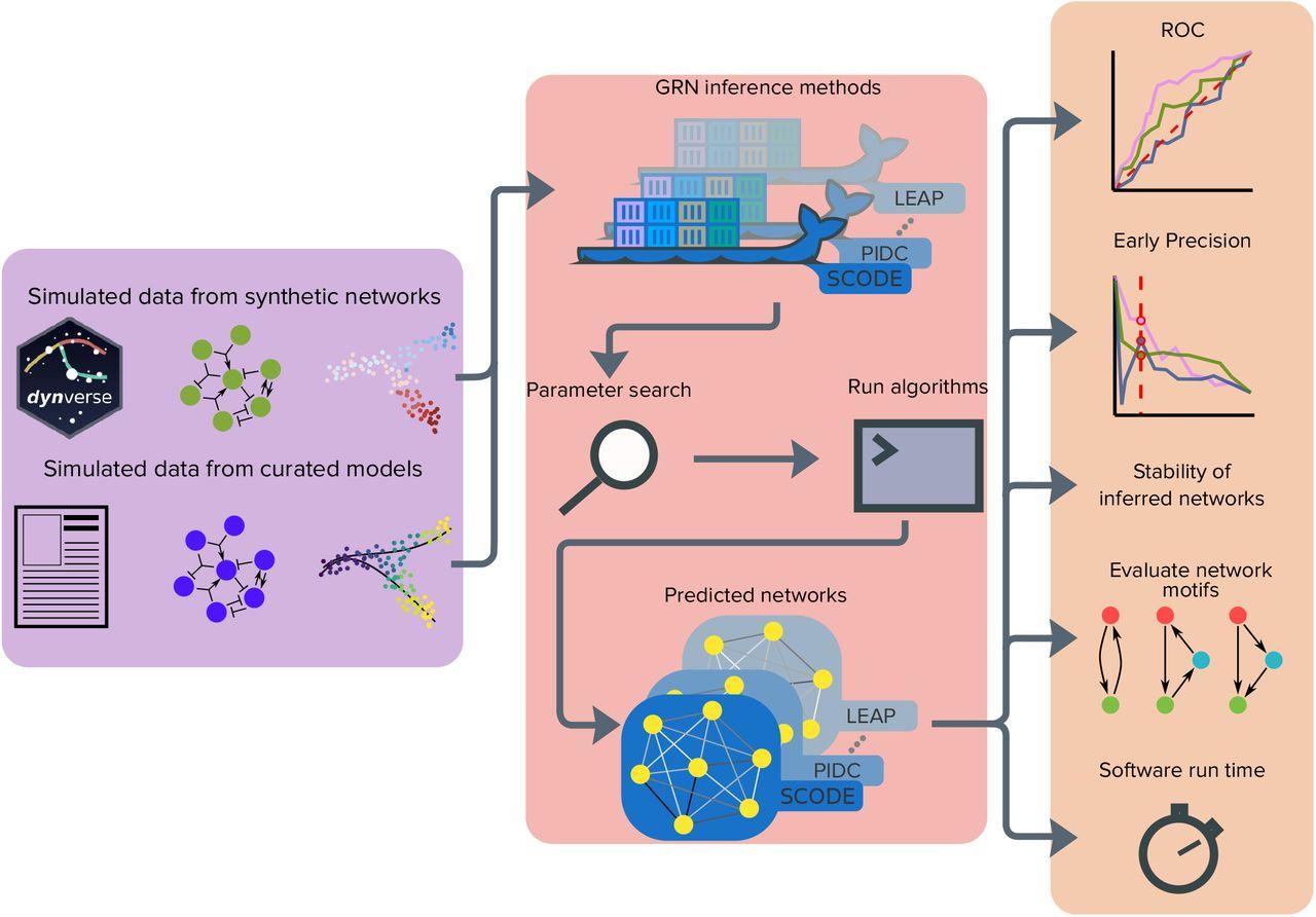 Benchmarking algorithms for gene regulatory network