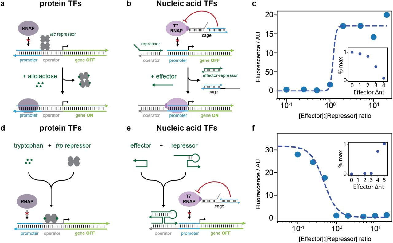 Cell-free transcriptional regulation via nucleic-acid-based