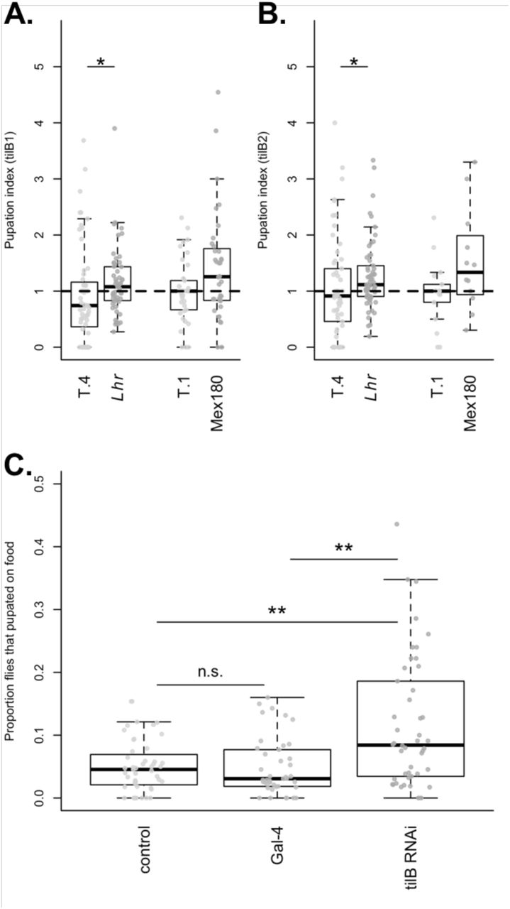 The loci of behavioral evolution: evidence that Fas2 and tilB