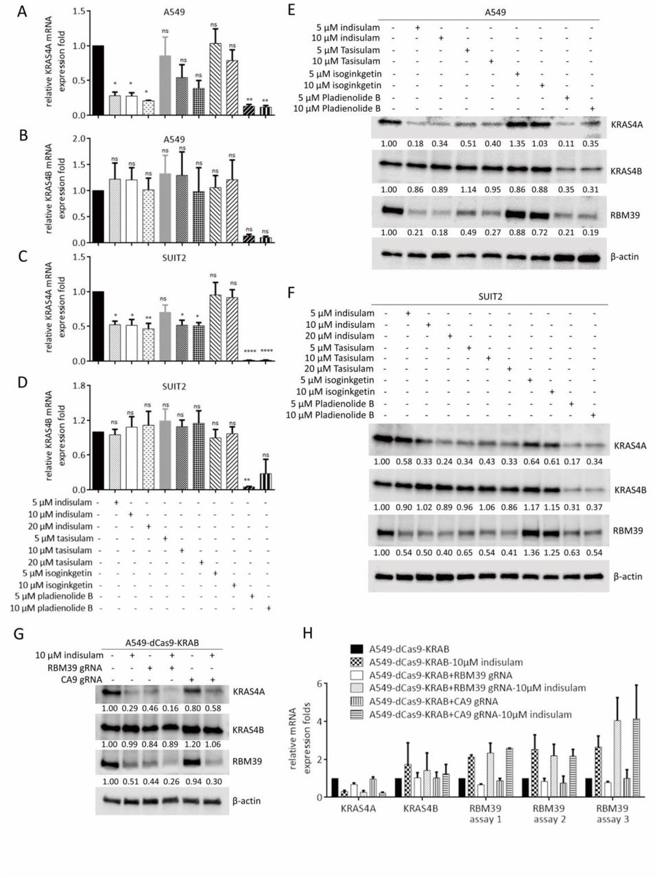 Regulation of KRAS4A/B splicing in cancer stem cells by the